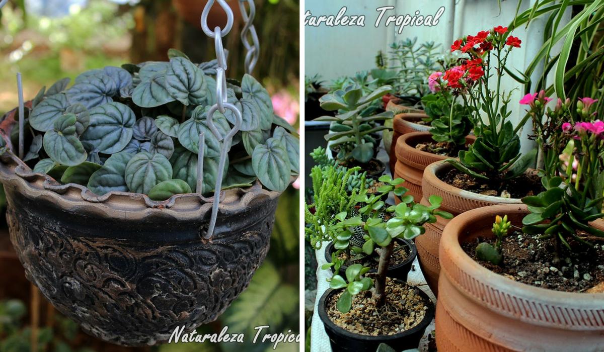Consejos de un jardinero profesional