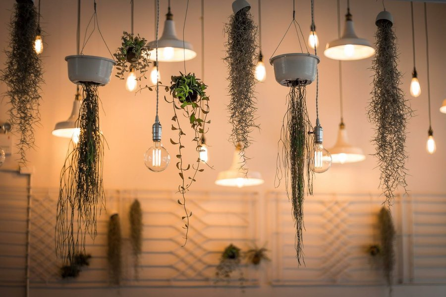 Decoración con plantas DIY