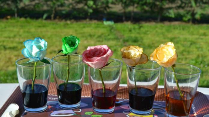 Cambia El Color De Tus Flores Con Estas 3 Sencillas Técnicas Mi