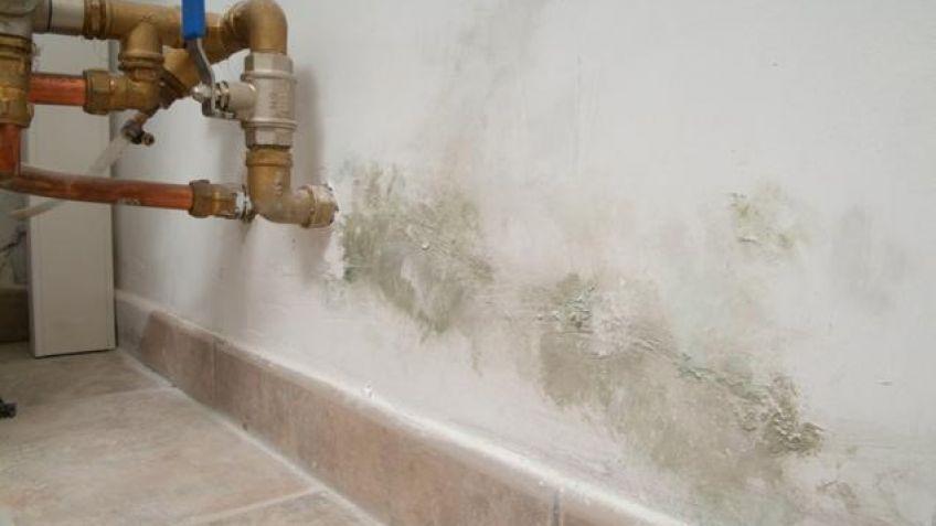 Aprende a arreglar una pared con humedad sin gastar mucho - Humedad en pared ...